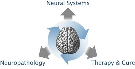 brain_schematics
