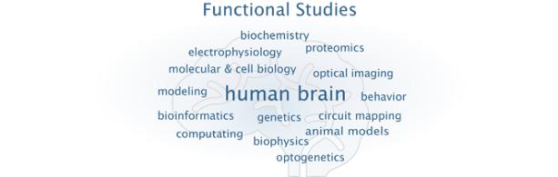 functional_studies